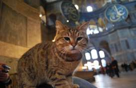 Gli, Kucing Kesayangan di Masjid Hagia Sophia Turki, Sakit