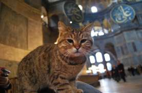 Gli, Kucing Kesayangan di Masjid Hagia Sophia Turki,…