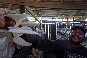 Petani Jarum Tiram Asli Papua