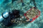 Lewat Program PEN, Terumbu Karang di Badung, Bali, Direstorasi
