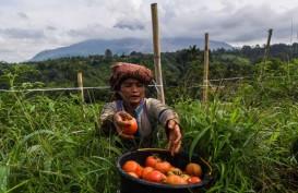 Jaminan Pasar Kunci Selesaikan Fluktuasi Harga Produk Hortikultura