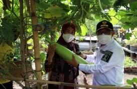 Pertanian Perkotaan Digalakkan di Kota Malang