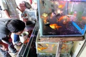 Prospek Bisnis Ikan Hias, Musiman atau Akan Bertahan?