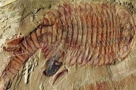 Ditemukan, Fosil Udang Bermata Lima