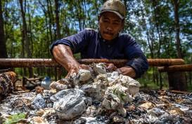 Tahun ini Serapan Karet Alam Diproyeksi Hanya 550.000 Ton