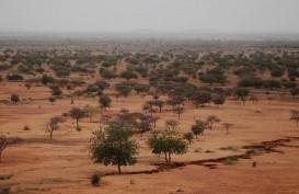 Perubahan Fungsi Lahan dan Iklim Susutkan Seperempat Habitat Hewan Darat Pada 2100