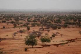 Perubahan Fungsi Lahan dan Iklim Susutkan Seperempat…