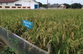 Genjot Pertanian, Pendampingan Perlu Dilakukan