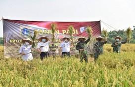 Kritis Lahan Sawah, Pemprov DKI Kolaborasi Bareng TNI AU Kembangkan Pertanian Padi