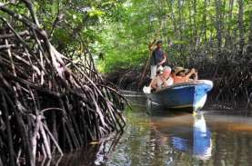 Program Padat Karya Penanaman Mangrove di Sultra Serap…