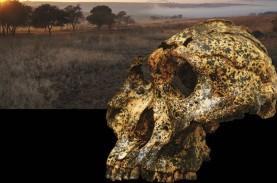 Perubahan Iklim Ubah Anatomi Manusia Purba