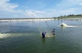 Holding BUMN Pangan Dibentuk, Konsumsi Ikan Diprediksi Menanjak