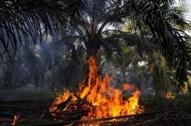 Greenpeace Rilis Video Investigasi Kebakaran Hutan,…