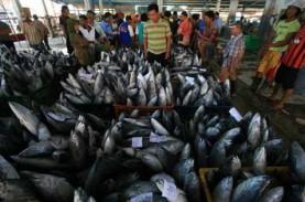 Puluhan Ton Ikan Kayu dari Sulut Diekspor ke Jepang