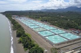 CP Prima (CPRO) Anggarkan Capex Rp102 Miliar pada…
