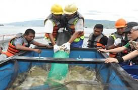 Japfa (JPFA) Incar Pendapatan Rp1 Triliun dari Bisnis Induk Udang