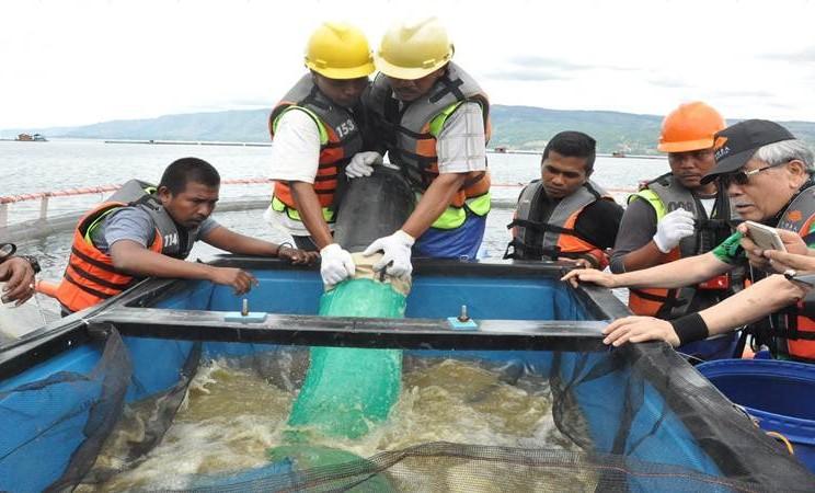 Keramba jaring apung di kawasan Danau Toba, Sumatra Utara milik PT Suri Tani Pemuka atau STP - anak perusahaan PT JAPFA Comfeed Indonesia saat ditinjau oleh matan Mentan Bungaran Saragih belum lama ini - Istimewa