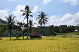 Kadin Menilai Pertanian Bisa Memicu Kebangkitan Ekonomi…