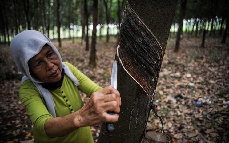Seorang buruh tani menyadap karet di perkebunan karet Ujung Jaya, Kabupaten Sumedang, Jawa Barat, Selasa (21/7/2020). Kementerian Perindustrian mencatat, hingga semester awal 2020, produksi karet alam baru memenuhi sekitar 55,4 persen dari kapasitas sektor tersebut yang mencapai 5,9 juta ton. ANTARA FOTO - Raisan Al Farisi
