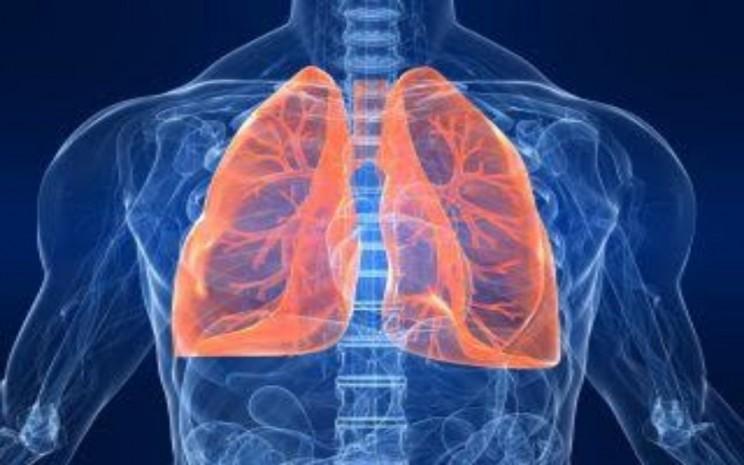 Ilustrasi paru - livescience