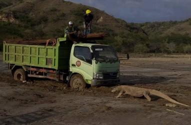 Ancam Ekosistem Komodo, Anggota DPR Pertanyakan Konsep Pariwisata di Rinca