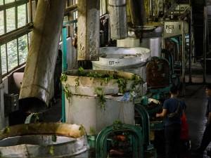 Pabrik teh Ciater Mempu Menghasilkan Teh Hitam Minimal 12 Ton Perhari