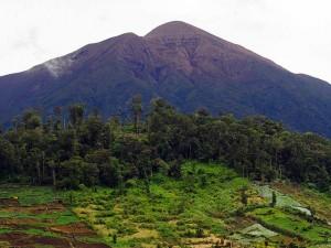 Kawasan Taman Nasional Kerinci Seblat Jadi Gundul