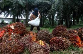 TBS Sawit Riau Turun 1,44 Persen, Tetap di atas Rp2.000 per Kilogram