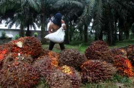 TBS Sawit Riau Turun 1,44 Persen, Tetap di atas Rp2.000…