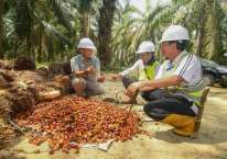 Ilustrasi - Petani sawit mendapatkan pembinaan dari Cargill terkait peningkatan produktivitas kebun untuk menunjang pendapatan petani. istimewa