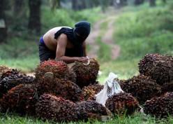 Kebijakan India dan Malaysia Buat Harga CPO Berbalik Menguat