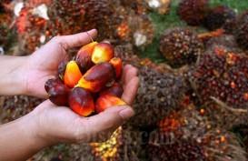 IPOC 2020 Dibuka, Gapki Sebut Industri Sawit Ikut Terdampak Pandemi