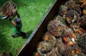 Sri Mulyani Berlakukan Pungutan Ekspor Progresif CPO…
