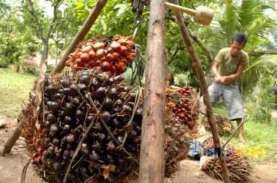 Pungutan Ekspor CPO Disesuaikan, Pemerintah Jamin…