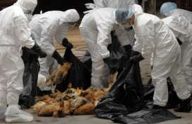 Inggris Waspada Flu Burung, 10.500 Unggas Dimusnahkan