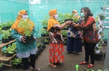 Pemberdayaan Ekonomi Kreatif Urban Farming