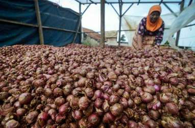 Ekspor Bawang Merah, Bali Kantongi Ratusan Miliar Rupiah dari Singapura