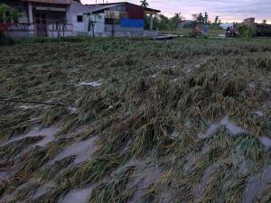 Banjir Rusak Areal Taman Pertanian di Sumatera Selatan