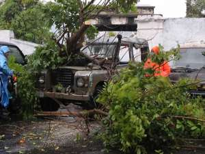 Diguyur Hujan Deras, Surabaya Terendam Banjir dan Sejumlah Pohon Tumbang