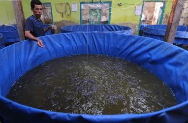 Pembudi Daya Ikan di Kalbar Dikucuri Rp1,8 Miliar
