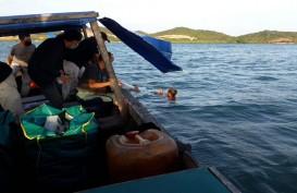 Benih Lobster Sitaan Senilai Rp4,3 Miliar Dilepasliarkan di Perairan Batam