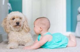 Cara Merawat Bayi dan Hewan Peliharaan Secara Bersamaan