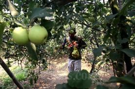 Kementan Optimistis Sektor Pertanian Kembali Tumbuh…