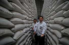 Diversifikasi Pangan, Bulog Bikin Beras dari Singkong