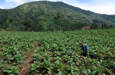 Pelestarian Keanekaragaman Hayati Pegunungan Perlu Ditingkatkan