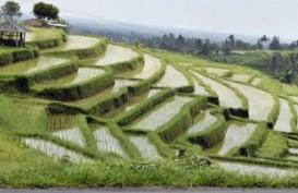 Kinerja Sektor Pertanian di Bali Bakal Merosot di Kuartal IV/2020