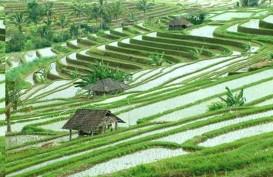 Produksi Komoditas Pertanian di Bali Terhambat, Ini Penyebabnya