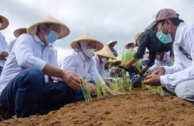 Uji Coba Sukses, Purwakarta Siapkan Lahan Bawang Merah 30 Hektare