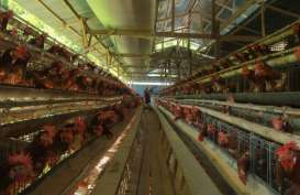 Harga Telur Diprediksi Sentuh Level Tertinggi Pekan Terakhir Desember
