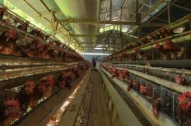 Harga Telur Diprediksi Sentuh Level Tertinggi Pekan…